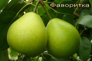 ФАВОРИТКА
