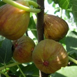 турецкий коричневый